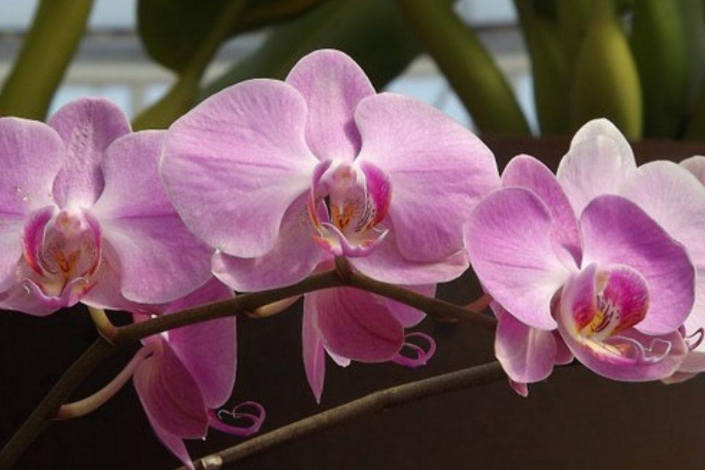 ¿Qué necesitan las orquídeas?