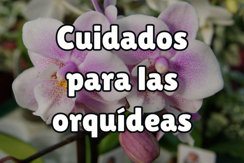 Los mejores cuidados para las orquídeas