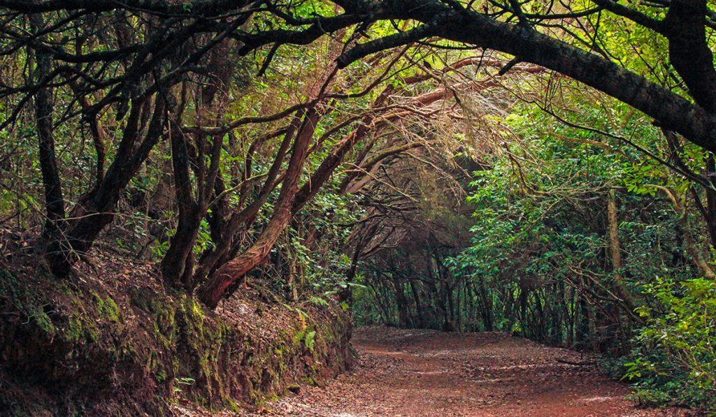 Bosques de Laurisilva de Anaga